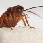 ТОП-14 заговоров от тараканов в квартире