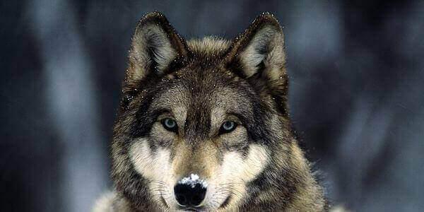 k-stat-volkom-v-realnosti