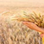 Обряды на Хлебный Спас