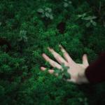 Травы в магии